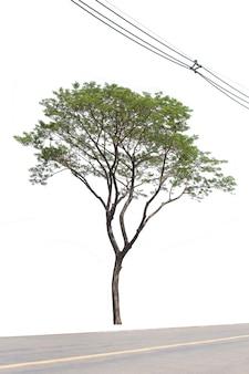 Regenboom met stroomdraad en weg op witte achtergrond wordt geïsoleerd die.