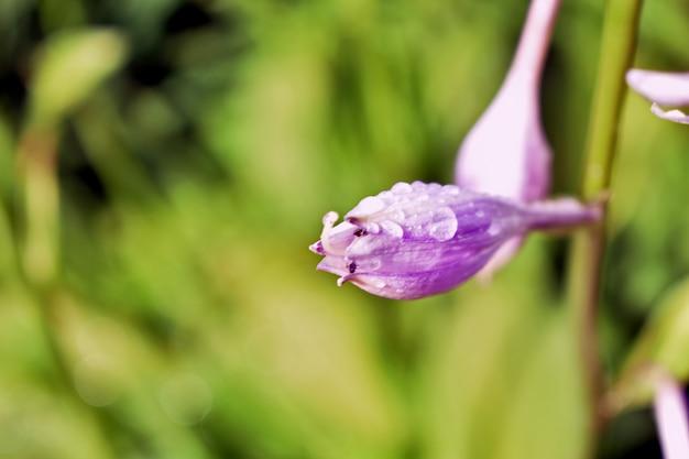 Regendruppels op delicate bloemblaadjes
