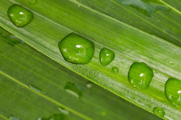 Regendruppels op palmbladeren close-up achtergrond
