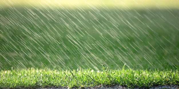 Regendruppels vallen op groen gras, natuurlijke achtergrond, weersvoorspelling