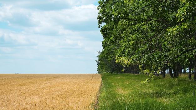 Regeneratieve landbouw, holistisch management, landbouwprobleemconcept