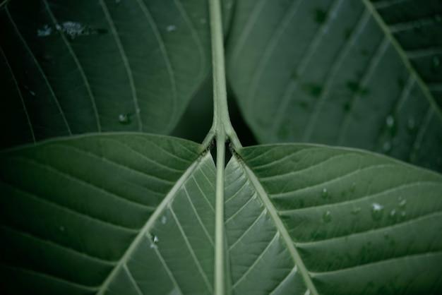Regenwater op een groene bladmacro.