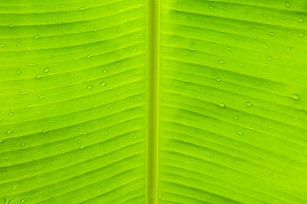 Regenwaterdaling op groene banaleaf