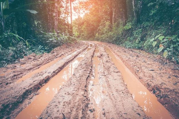 Regenwoud met een onverharde weg