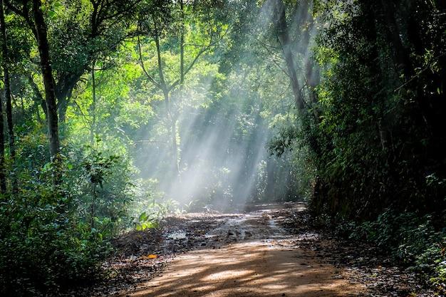Regenwoud met een vuilweg