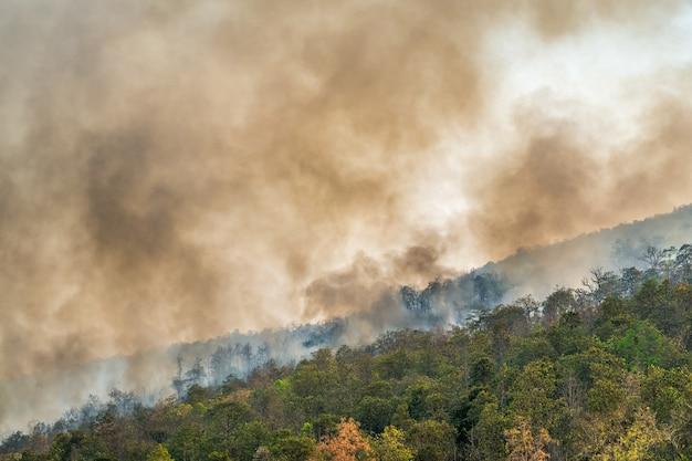 Regenwoudbrandramp brandt veroorzaakt door mensen