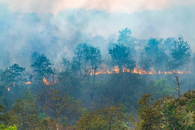 Regenwoudbrandramp is een brand veroorzaakt door mensen