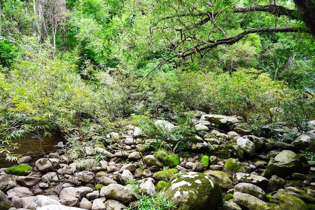 Regenwoudjungle met rots en groene mos in het wilde tropische bos