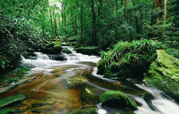 Regenwoudwildernis met rots en groene mos in het ochtend wilde tropische bos