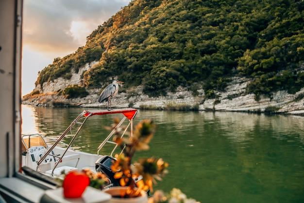 Reiger staat op een boot op de rivier tijdens zonsondergang.