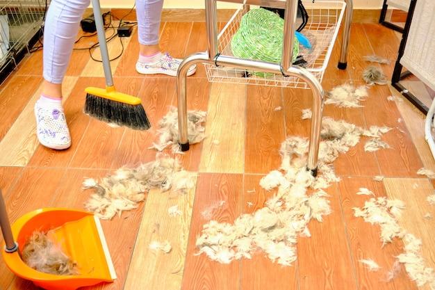 Reiniging van dierenharen op de vloer na het knippen van het dier.