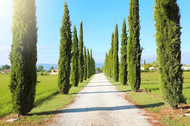 Reis in toscane. mooi en idyllisch landschap van een laan van cipressen op het toscaanse platteland in italië.