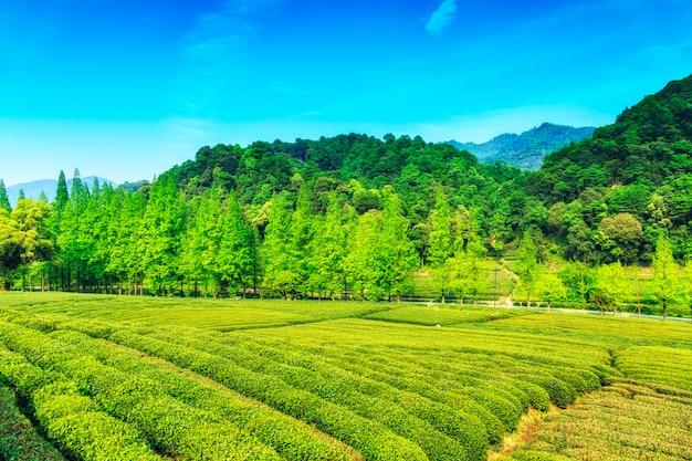 Reis plukken toerisme landschap boer Gratis Foto