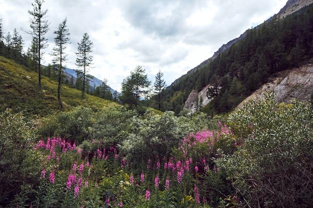 Reis te voet door de bergdalen. de schoonheid van dieren in het wild. altai, de weg naar shavlinsky-meren