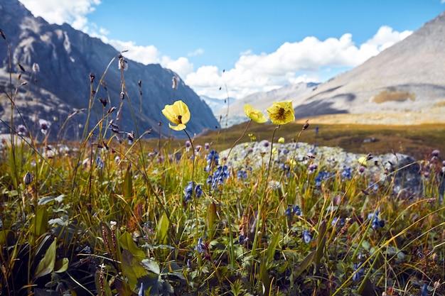 Reis te voet door valleien van de bergen