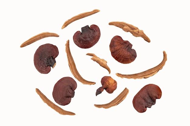 Reishi of lingzhi-paddenstoel geïsoleerd. bovenaanzicht, plat leggen.