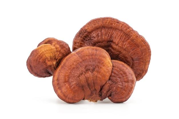 Reishi of lingzhi paddenstoel geïsoleerd.