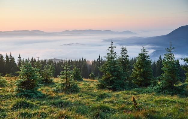 Reizen, trekking. zomerlandschap - bergen, groen gras, bomen en blauwe lucht.