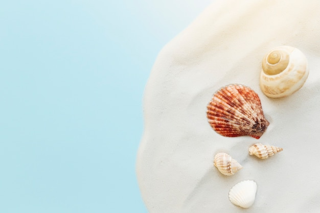 Reizen, vakantie concept. zeeschelpen op zand en blauwe achtergrond. reizen, reis.