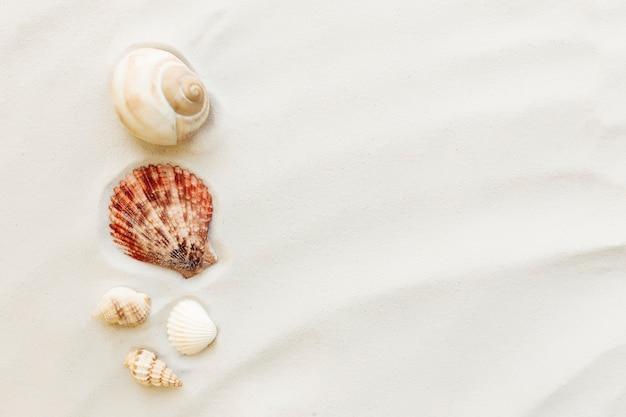 Reizen, vakantie concept. zeeschelpen op zand en blauwe achtergrond.