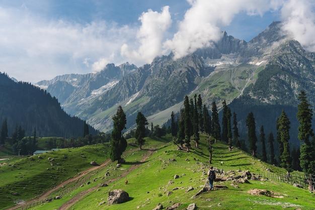 Reizend in de zomer, een man met rugzak wandelen op weide en dennenbossen met uitzicht op de bergen