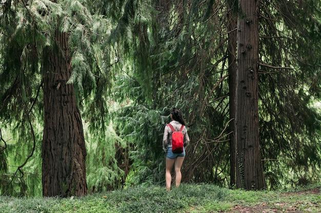 Reiziger vrouw met rugzak wandelen in het bos