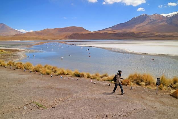 Reiziger wandelen op de zoute oever van het meer van laguna hedionda met de flamboyance van roze flamingo's in de verte, andes altiplano, provincie nor lipez, bolivia