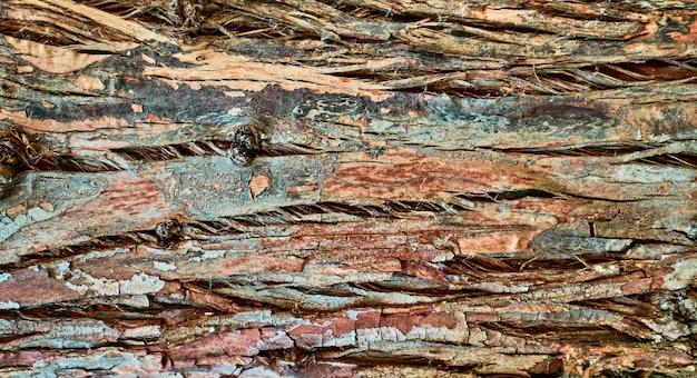 Reliëfstructuur van oude boomschors, rode en groene tinten. achtergrond decoratie
