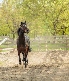 Rennend paard
