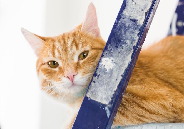 Reparatie schilderen van de muren de kat zit op de grappige foto van de trapladder
