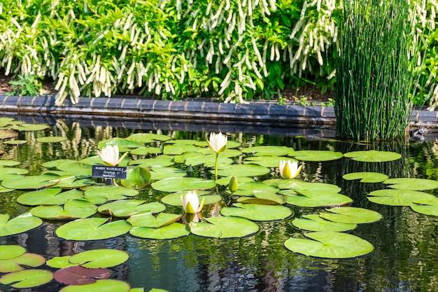 Reservoir met lelies en waterlelies.