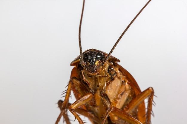 Resten van dode kakkerlakken