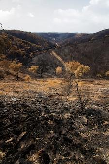 Resten van een bosbrand