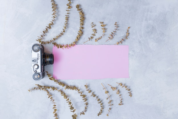 Retro camera dichtbij roze document tussen reeks droge planttakjes