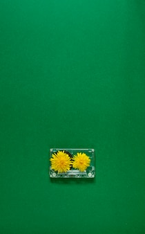 Retro transparante audiocassetteband en twee gele paardebloembloemen op groene achtergrond. vintage muziektechnologie