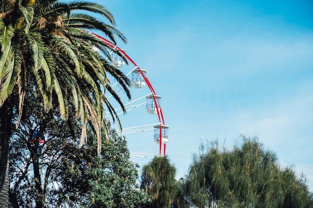 Reuzenrad en boom