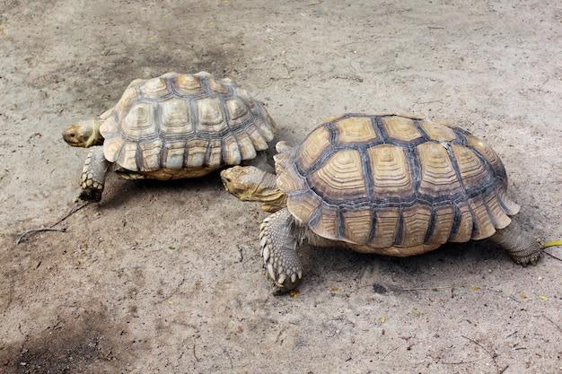 Reuzenschildpadden in dierentuin