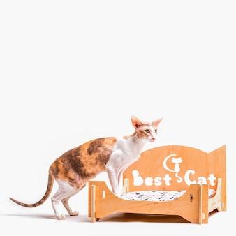 Rexkat die van cornwall zich op huisdierenbed bevindt dat op witte achtergrond wordt geïsoleerd
