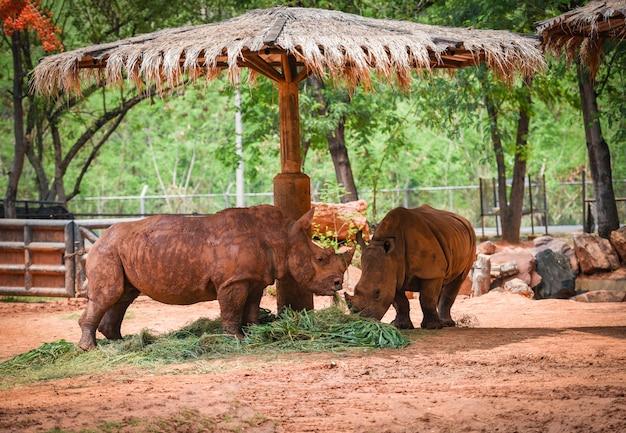 Rhino-landbouwbedrijfdierentuin in het nationale park - witte rinoceros