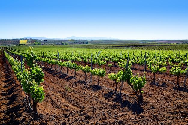 Ribera guadiana-wijngaard extremadura spanje