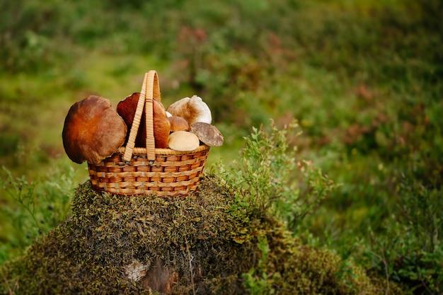 Rieten mand aan de groene rand van het bos met paddenstoelenoogst Premium Foto