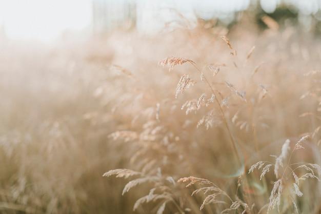 Rietstengels in een landelijk engeland