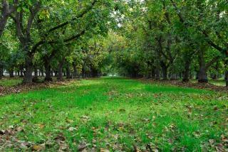 Rij bomen, bladeren, en groen gras