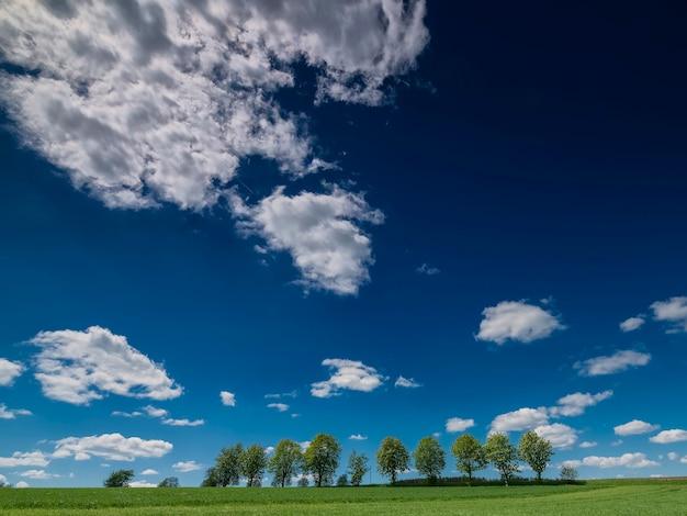 Rij bomen in het veld met uitzicht naar de wolken