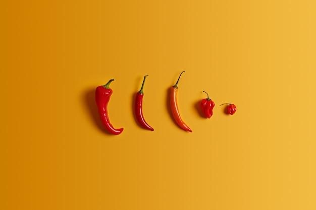 Rij hete rode spaanse peperpeper van verschillende grootte en vorm op gele achtergrond. soorten hete peper. pittig eten concept. verschillende cayennes. niemand op de foto. gezonde groenten voor het bereiden van salade