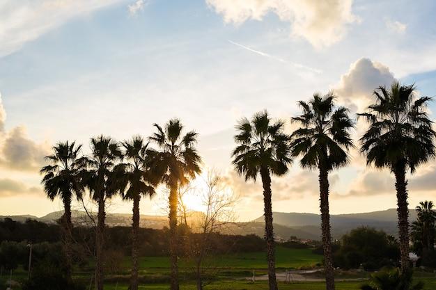 Rij palmbomen tegen ondergaande zon en bergen.