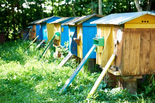 Rij van bijenkorven in een bijenstal in openlucht in de van de de zomerlente van de tuinaard de seizoengebonden bijenteelt het concept van de de hobbyhoning van de de landbouwberoep.