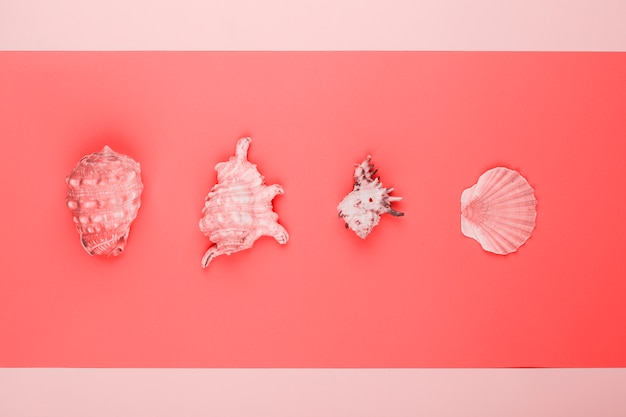 Rij van conch en mantel schelpen op koraal en roze achtergrond