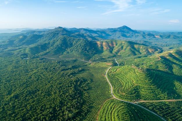 Rij van de tuin van de palmaanplanting op hoge berg
