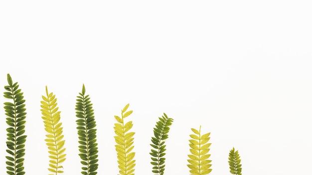 Rij van gele en groene varenstwijgen